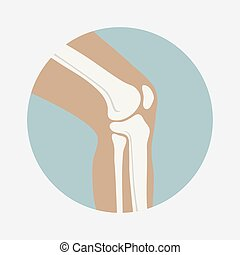 Human knee joint