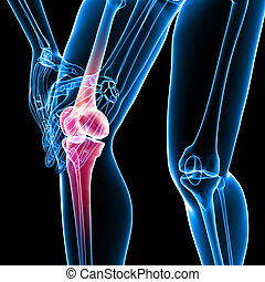 Human knee pain on black - 3d rendered Illustration of...