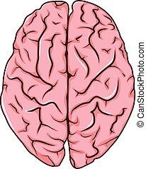 human left and right brain cartoon