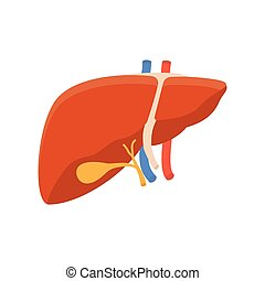 Human liver icon, internal human organ isolated on white...