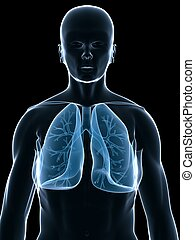 human lung - 3d rendered illustration of a human body shape ...
