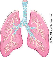 Human lung anatomy - vector illustration of Human lung...
