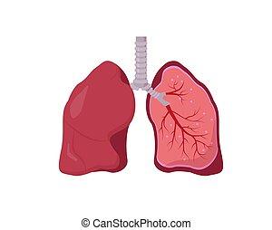 Human lung anatomy diagram on white background.