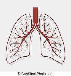 Human Lung anatomy illustration . Illness respiratory cancer graphics. Vector