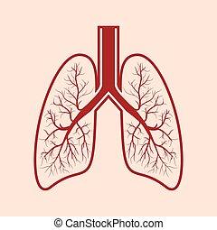 Human lung anatomy.
