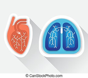 Human lungs and heart flat illustration