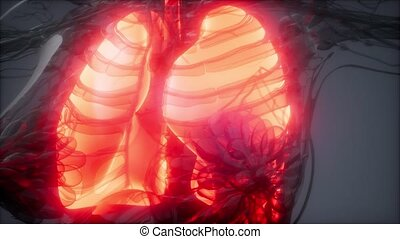Human Lungs Radiology Exam