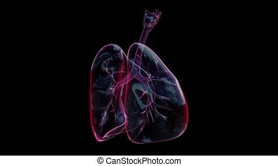 Human lungs with bronchi of mesh of model. Looping motion animated 3d model.
