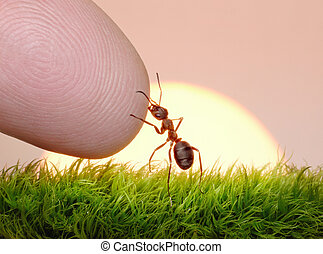 human, nature and ant - finger of friendship on sunrise