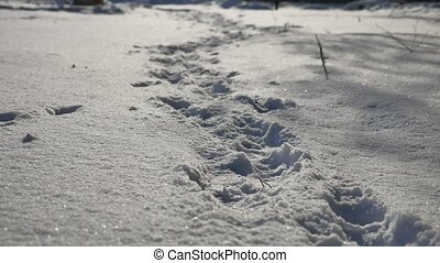 human nature footprints in the snow winter landscape path...