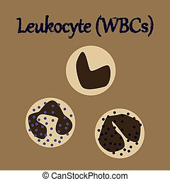 human organ icon in flat style leukocyte