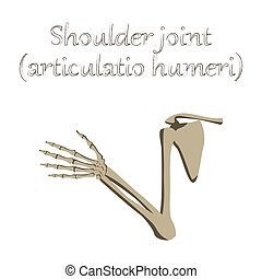 human organ icon in flat style shoulder joint