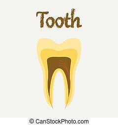 human organ icon in flat style tooth