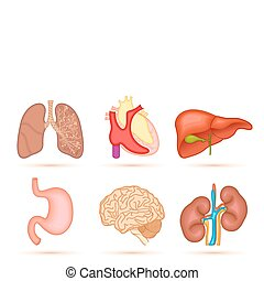 illustration of set of interal organ of human on white background