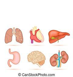 Human Organ - illustration of set of interal organ of human ...