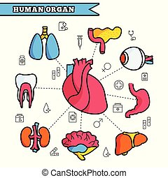 Human organ thin line illustration concept set design