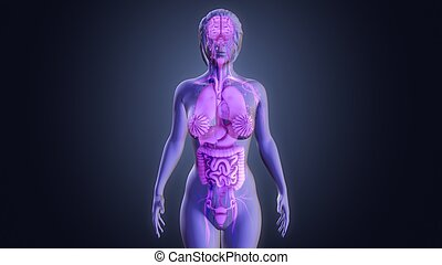 Human Organs - There are almost 78 organs in a human body...