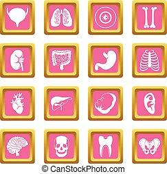 Human organs icons pink