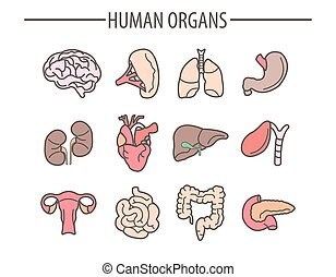 Human organs medical vector flat isolated icons set