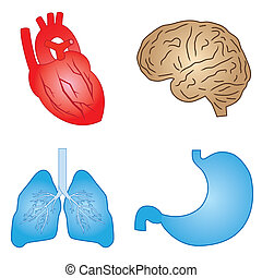 Set of cartoon images of human organs on the white background.