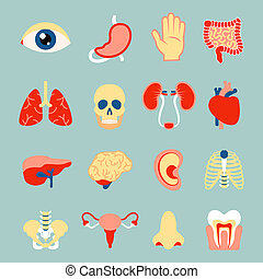 Human organs set of eye tooth lungs brain isolated vector illustration