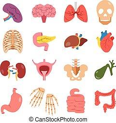 Human organs set. Vector flat
