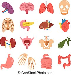 Human organs set. Vector flat - Human organs set. Modern...