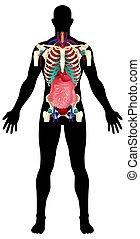 Stock image of man figure with his organs