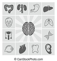 Human organs thin line and silhouette icons