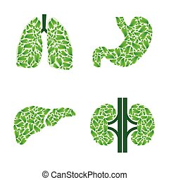 Human organs with leaves