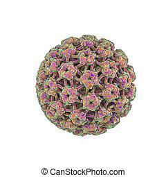 Human papillomaviruses isolated on white background