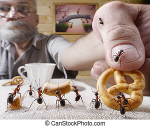 human rewards ants with bake, ant tales