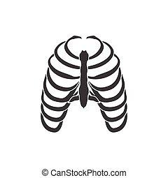 Human ribs vector