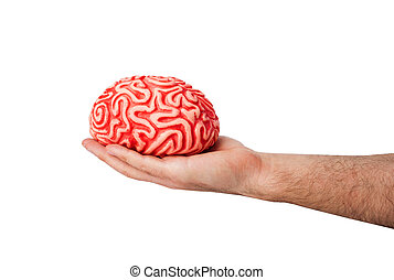 Human rubber brain in a hand on white background.