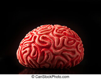 Human rubber brain