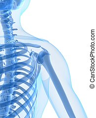 human shoulder - 3d rendered x-ray illustration of a human...