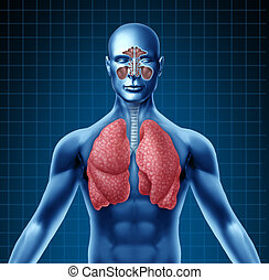 Human sinus with nasal cavity and respiratory system represented by a blue human figure with lungs showing the medical health care symbol for breathing and inhaling after a cold and flu viral attack.