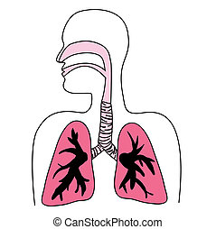human, sistema respiratório, diagrama
