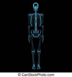 Human skeleton (3D xray blue transparent)