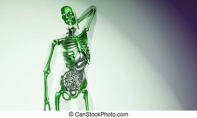 human skeleton bones model with organs - 4K medical science...