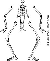 Human skeleton drawing - Sketch like illustration of a human...