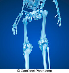 Human skeleton: Knee joint  . Medically accurate 3D illustration