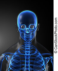 Human Skeleton Medical Scan