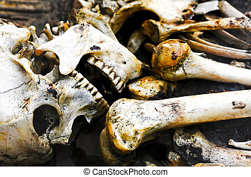 Human skeleton - Old human skeleton exhumed from ancient...