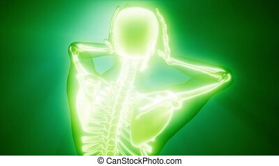 human skeleton radiography medical scan