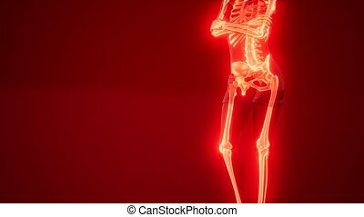 Human Skeleton Radiography Medical Scan - human skeleton...