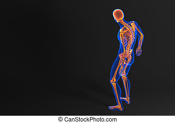 Human skeleton anatomy angled rear view a angled rear view human skeleton rear view contains clipping path ccuart Image collections