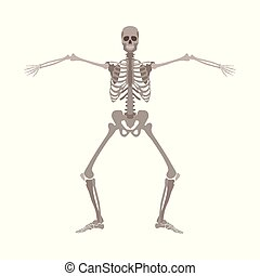 Human skeleton standing with legs bent and arms wide apart cartoon flat style
