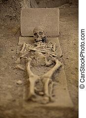 skeleton - Human skeleton