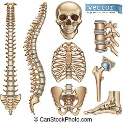 Human skeleton structure. Skull, spine, rib cage, pelvis, joints. Anatomy and medicine. 3d vector icon set